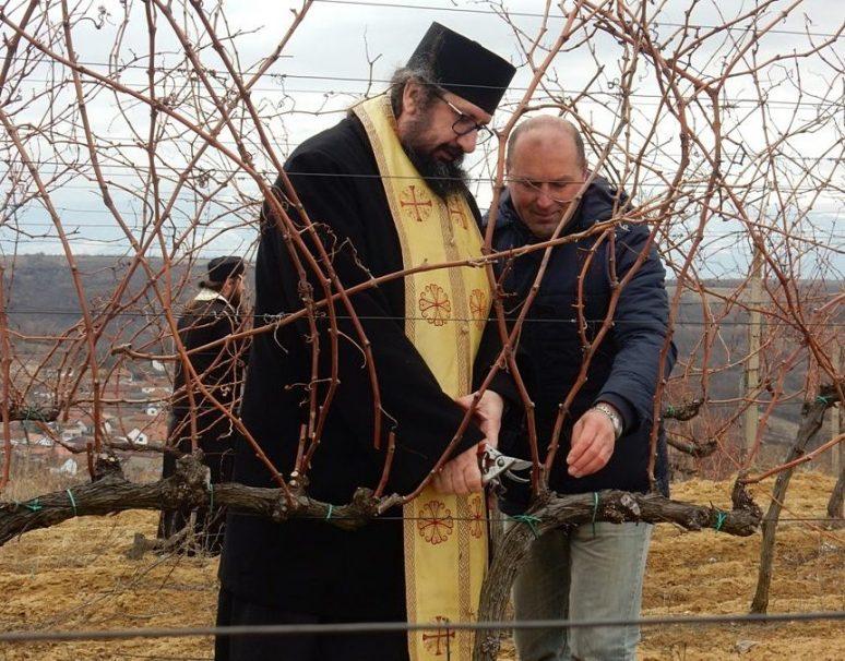Orezivanje Prvih Cokota U Decanskom Vinogradu